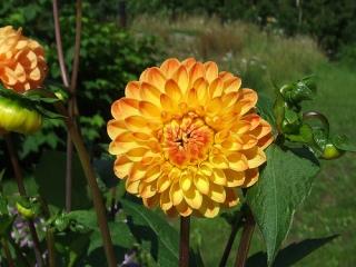 Финские цветы