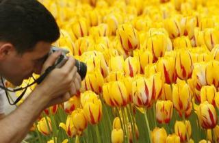 Тюльпаны Турции