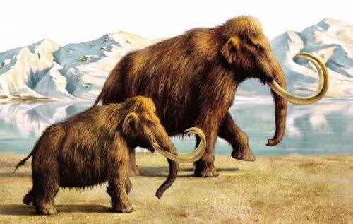 Российские ученые задумали клонировать древних животных