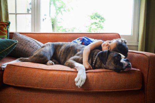 Телесный язык собак говорит о том, что им не нравится очень близкий — обездвиживающий — контакт с человеком.